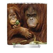 Orangutan Mother And Baby Shower Curtain