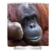 Orangutan Portrait Shower Curtain