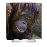 Orangutan Portrait Shower Curtain