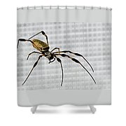 Orb Spider 4 Shower Curtain