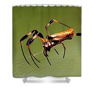 Orb Weaver - Coastal Spider Shower Curtain