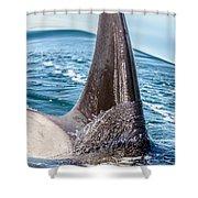 Orca Apex II Shower Curtain
