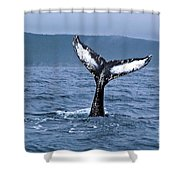 Orca Bitemarks On Humpback Tail Shower Curtain