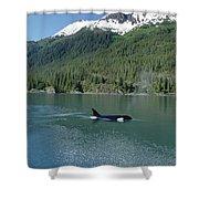 Orca Female Inside Passage Alaska Shower Curtain