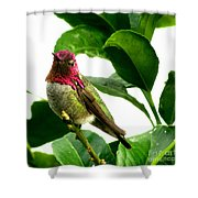 Orchard Friend Shower Curtain