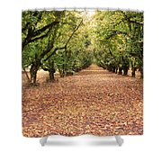Orchard In The Morning Shower Curtain