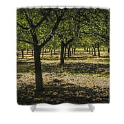 Orchard In West Michigan No. 279 Shower Curtain