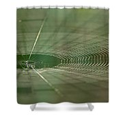 Orchard Orbweaver #2 Shower Curtain