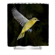 Orchard Oriole Hen Shower Curtain