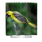 Orchard Oriole Icterus Spurius Juvenile Shower Curtain