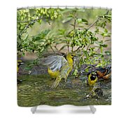 Orchard Orioles Shower Curtain