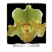 Orchid 003 Shower Curtain