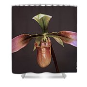 Orchid 102 Shower Curtain