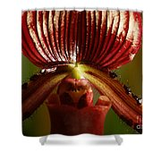 Orchid 132 Shower Curtain