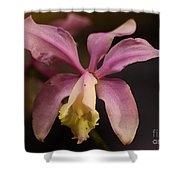 Orchid 133 Shower Curtain