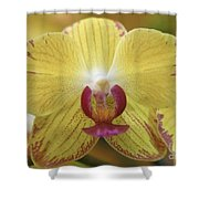Orchid 141 Shower Curtain