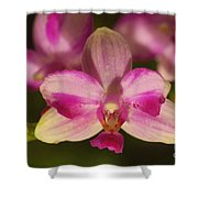 Orchid 144 Shower Curtain