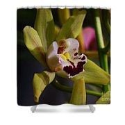 Orchid 148 Shower Curtain
