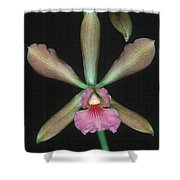 Orchid 15 Shower Curtain