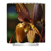 Orchid 150 Shower Curtain