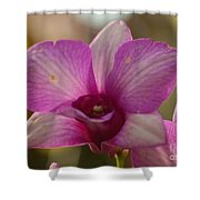 Orchid 152 Shower Curtain