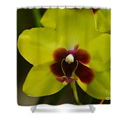 Orchid 153 Shower Curtain