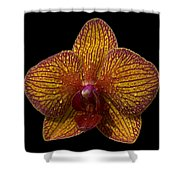 Orchid 16 Shower Curtain