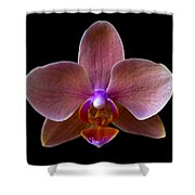 Orchid 17 Shower Curtain