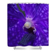 Orchid 196 Shower Curtain