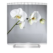 Orchid 1a Shower Curtain