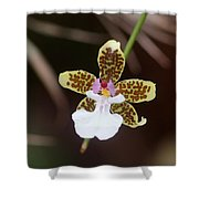 Orchid 205 Shower Curtain