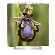 Orchid 25 Shower Curtain
