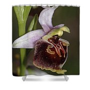 Orchid 29 Shower Curtain