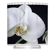 Orchid 2c Shower Curtain