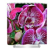 Radiant Orchid  Shower Curtain