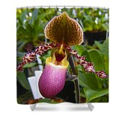 Orchid 31 Shower Curtain