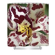 Orchid 32 Shower Curtain