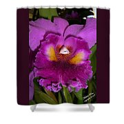 Orchid Flames Shower Curtain