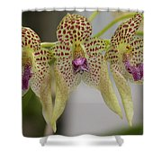 Orchid 8 Shower Curtain