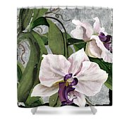 Orchid A - Phalaenopsis Shower Curtain
