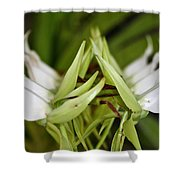 Orchid Arms Shower Curtain