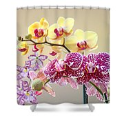 Orchid Art Prints Orchids Flowers Floral Bouquets Shower Curtain