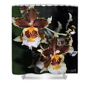 Orchid Brown Yellow White Macro Shower Curtain