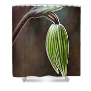 Orchid Bud Shower Curtain