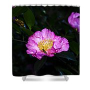 Orchid Camellia Pink - Camellia Sasanqua Shower Curtain