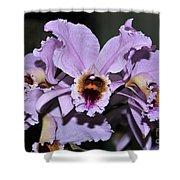 Orchid Cattleya Percivaliana Christmas Cattleya Shower Curtain