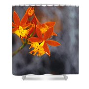 Orchid Circus Shower Curtain