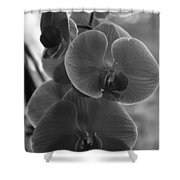 Orchid Cluster Shower Curtain