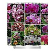 Orchid Collage 1 Shower Curtain