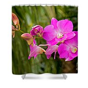 Orchid Dendrobium Shower Curtain